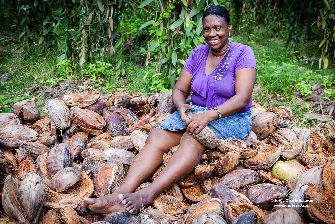 dried coconuts hand picked by workers La Digue Seychelles
