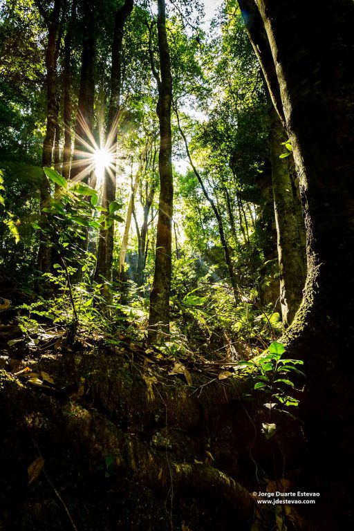 The sun shines through the dense forest in the Blue Mountains National Park, Australia