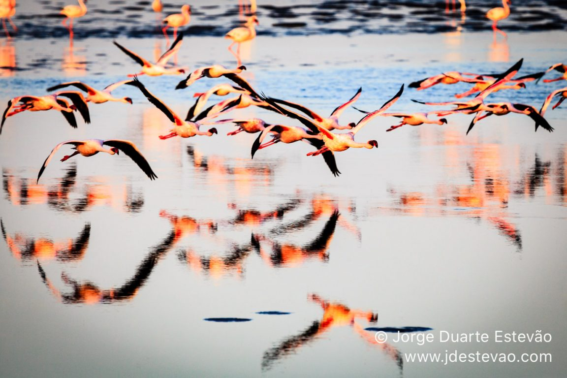 Thousands of flamingos in Walvis Bay, Namibia